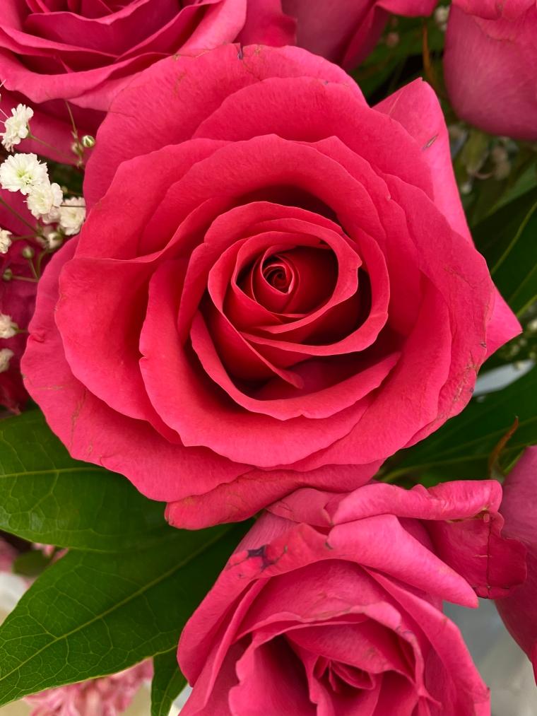 Rose 5_10_2