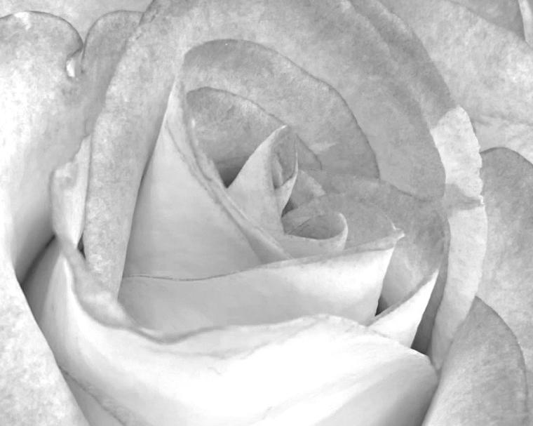 Rose 5_10_3 IR