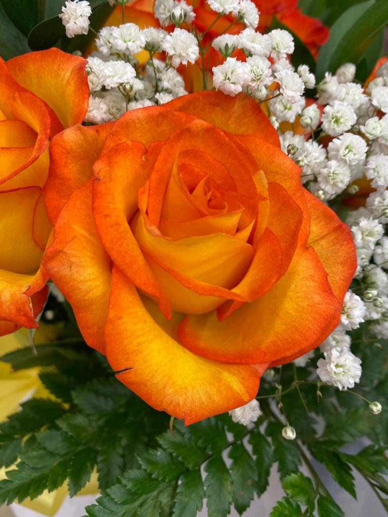Rose 5_10_3