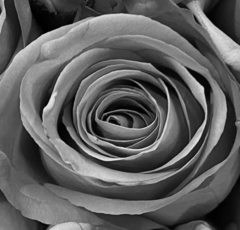 Rose 5_26_7 BW