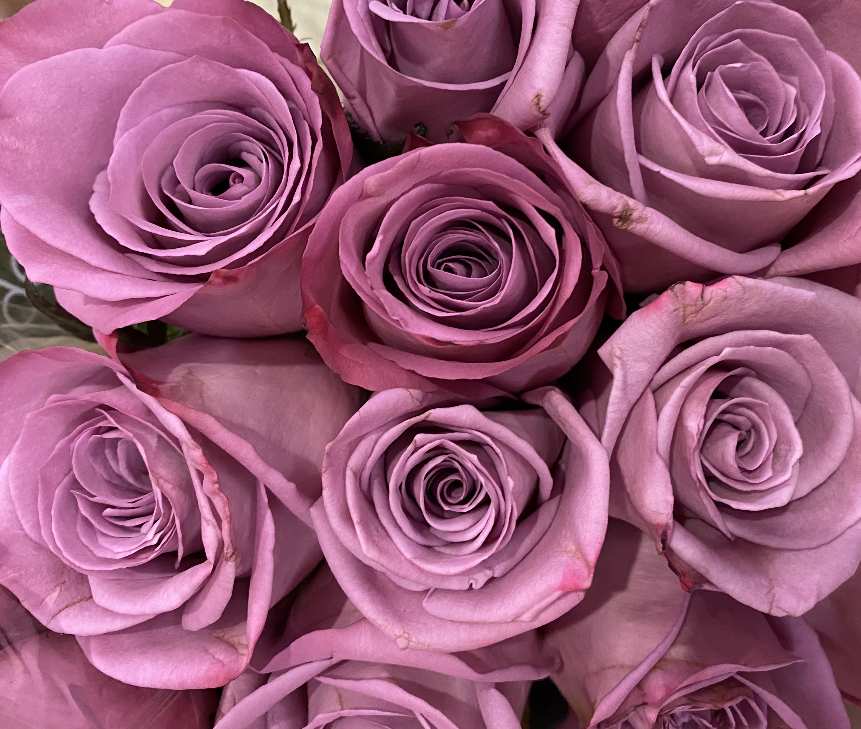 Rose 5_26_7