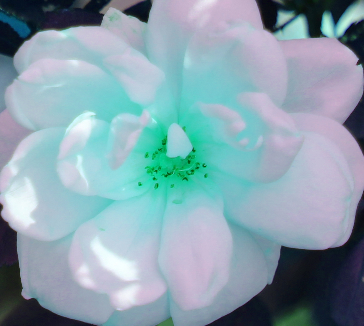 Rose psych 5_16_1