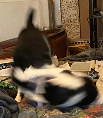 Rough blur 1