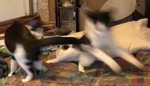 Rough blur 4