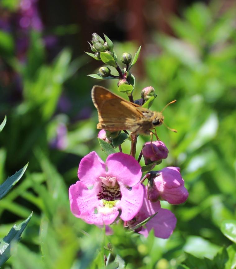 Butterfly 8_18_2