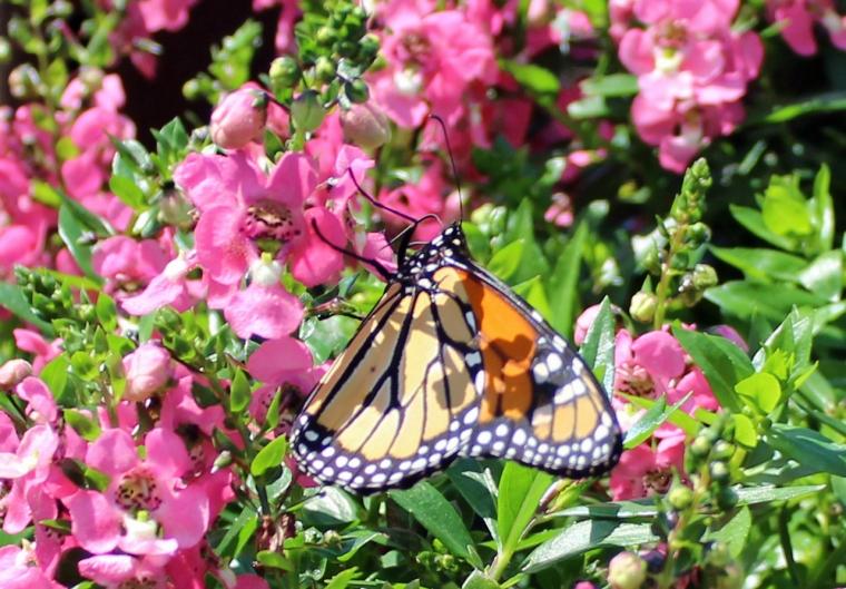 Butterfly 8_18_3