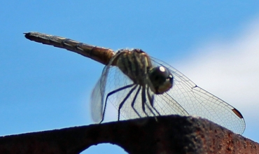 Dragonfly 8_18_3
