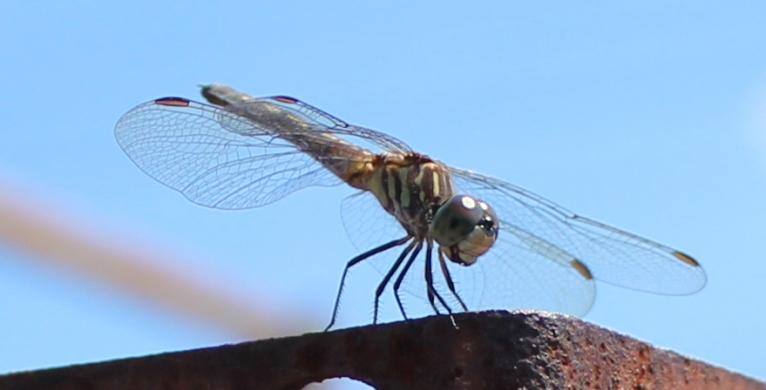 Dragonfly 8_18_4